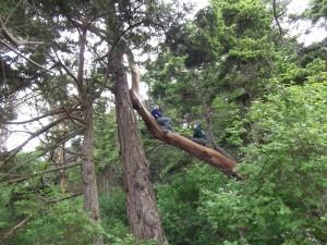 Patos  PSV tree climbers 136